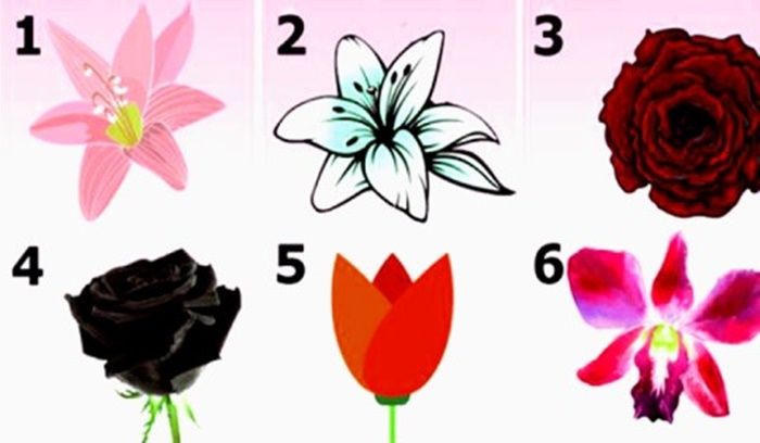 Mensagem oculta das flores